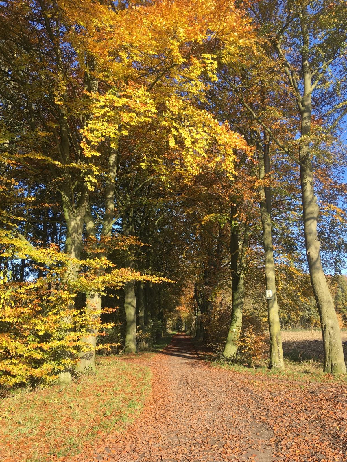 Herbst im Burgwald Dinklage am 10. November 2019