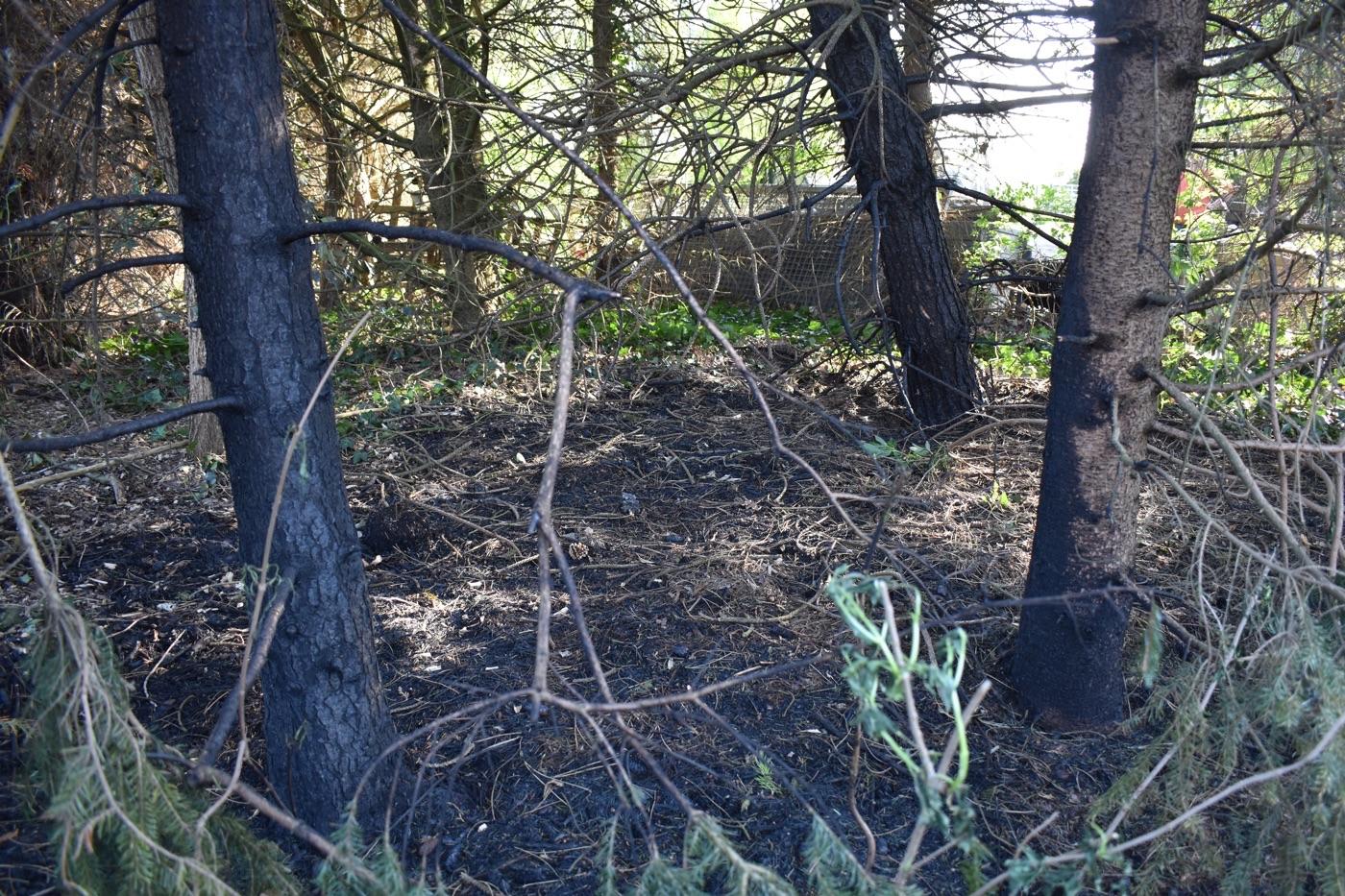Feuer am Friedhof · Verkohlte Bäume und Unterholz
