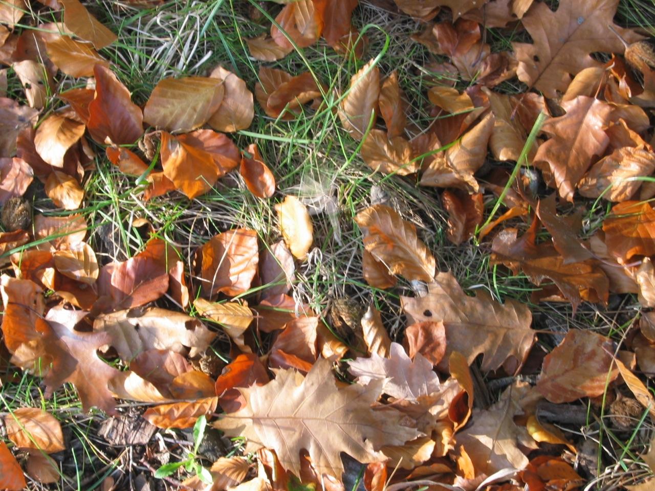Burgwald Dinklage @ 22. Oktober 2007