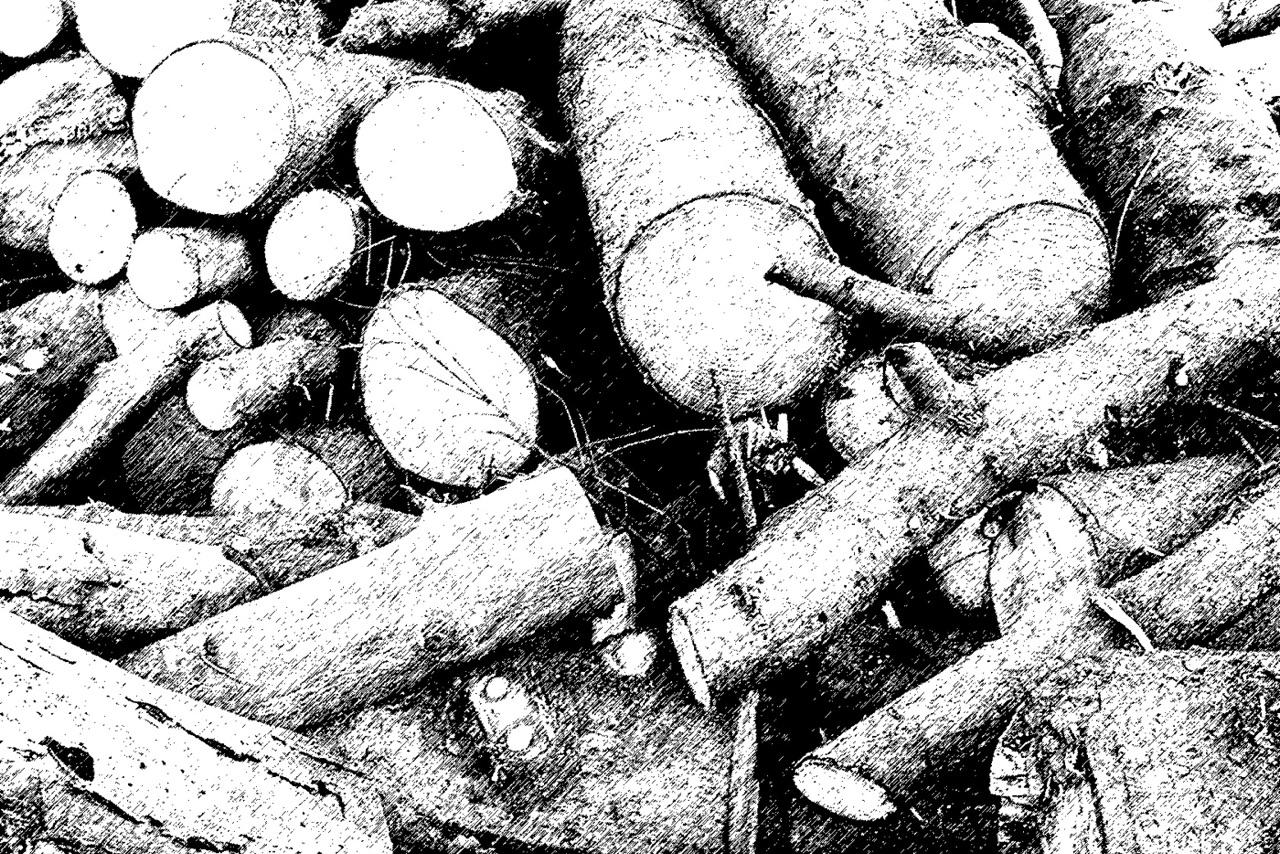 Dunkler Herbst · Holzhaufen · 2. März 2002