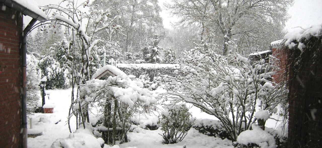 Verschneiter Garten · 22. November 2008