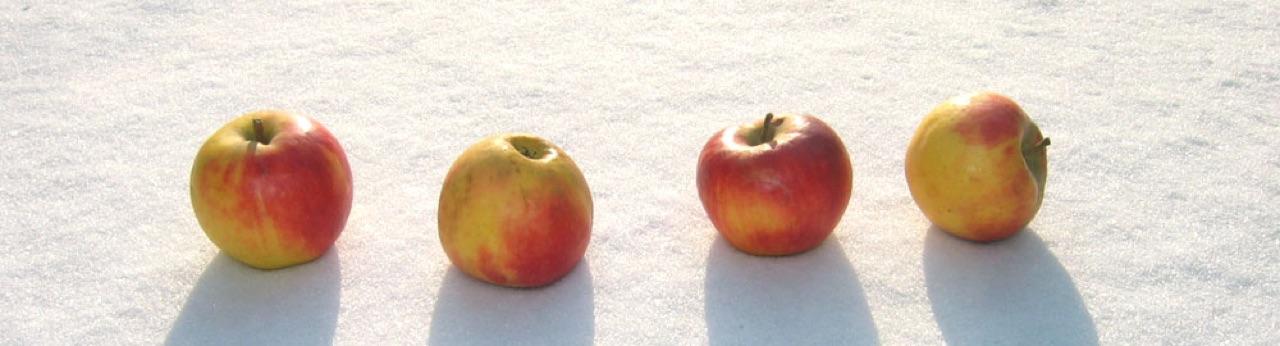 Vier Äpfel im Schnee · 27. Januar 2006